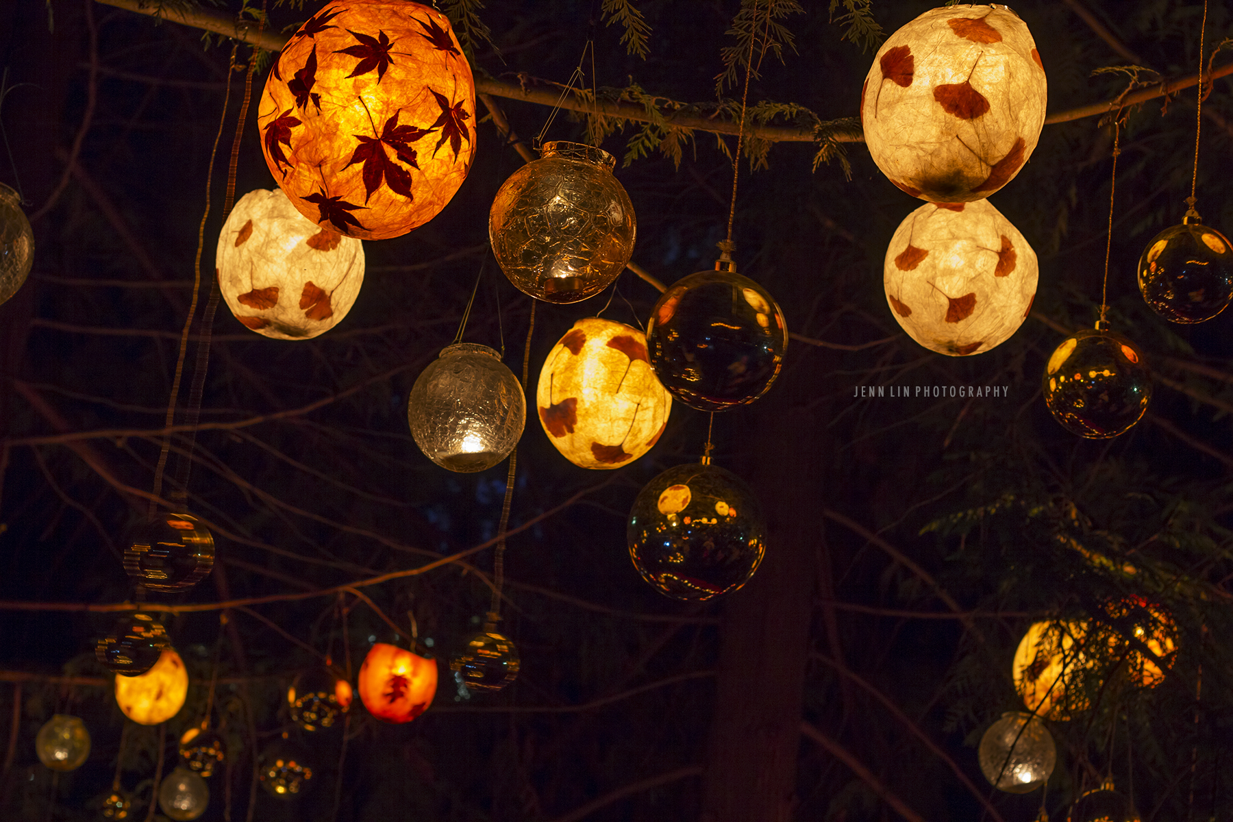 """Moon Festival Lanterns Hanging from a Tree"" © 2013 Jenn Lin Photography"