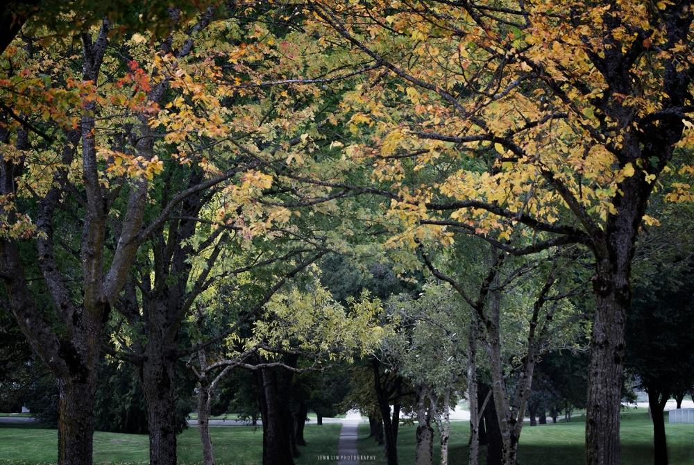 Fall Foliage © 2013 Jenn Lin Photography_4037_Green Version_1800px_WM