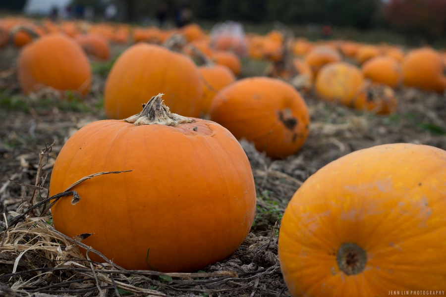 Pumpkin Patch by Jenn Lin Photography_5331