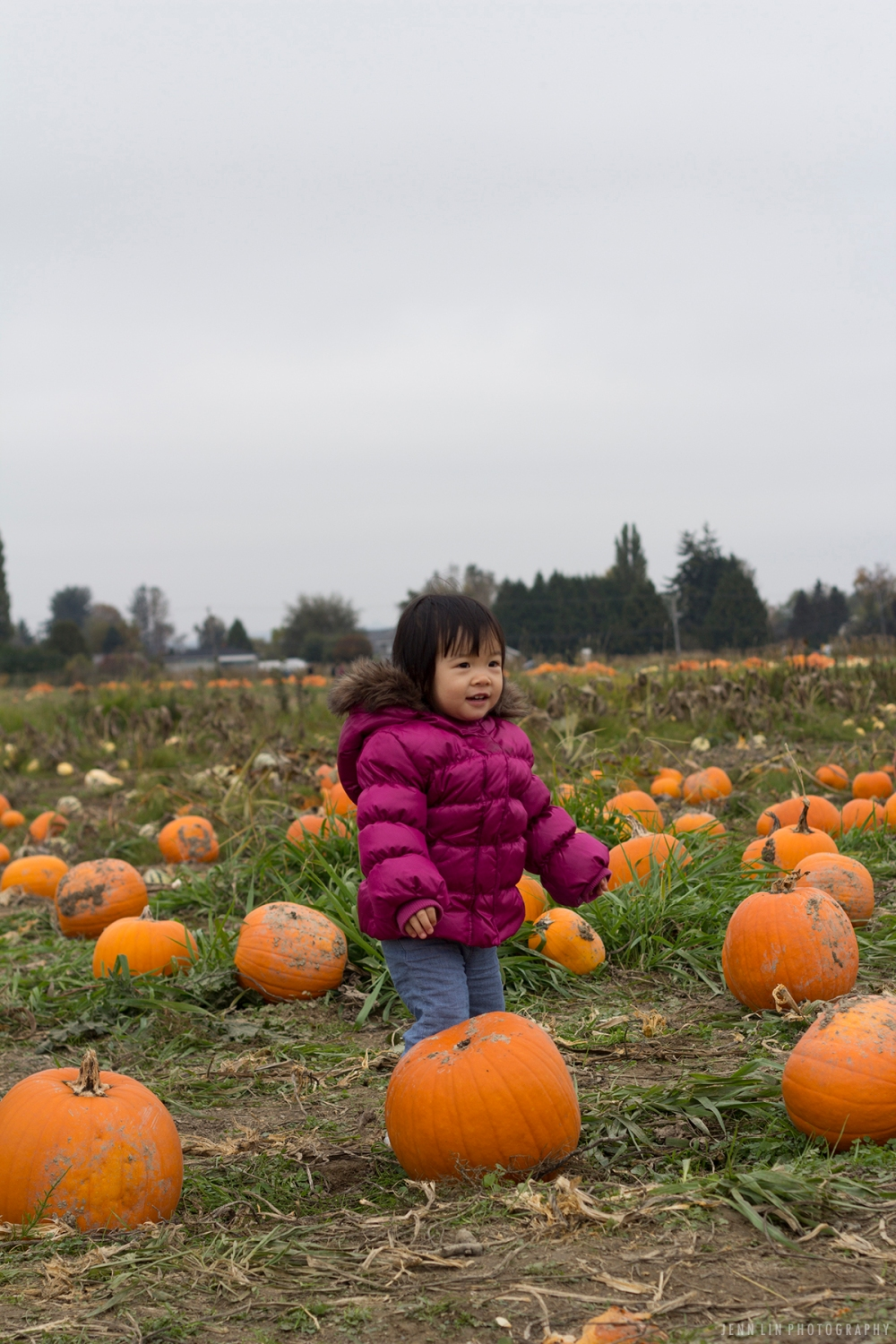 Pumpkin Patch by Jenn Lin Photography_5338