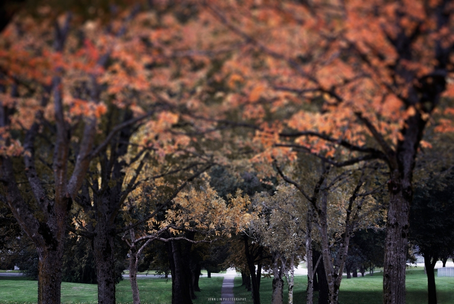 Red Leaves in the Park - Fall Foliage Collection © 2013 Jenn Lin Photography_4037_Red_Green Grass_1800px_Blur2_final