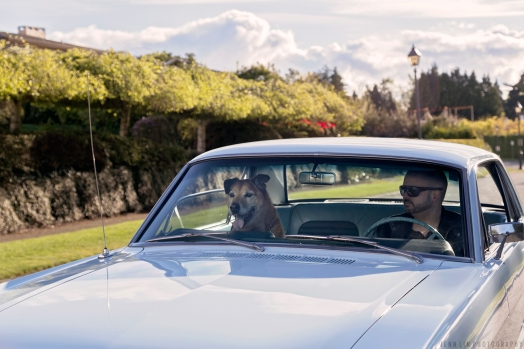Ford, Mustang, Vintage, baby blue, light blue, sky blue, car, car photoshoot, car shoot, dog, portrait photographer, vancouver, bc