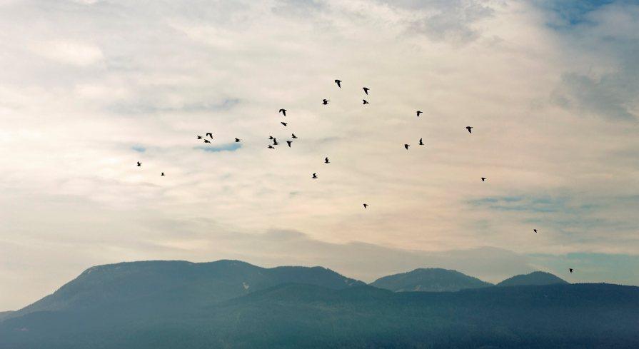 Fly Away © 2014 Jenn Lin
